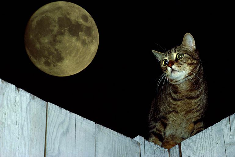Кошка гуляет ночью