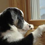 Отпуск без собаки: как выбрать передержку