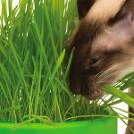 Выращивание травы для кошек в домашних условиях