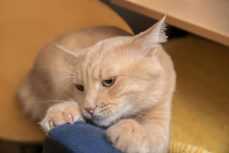 Кот дерёт диван