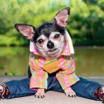 Гардероб для маленьких собак