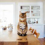 Как сделать дом безопасным для кошки