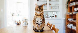 Кошка дома