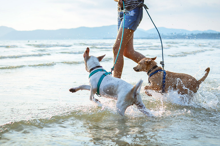 Собака бежит по воде