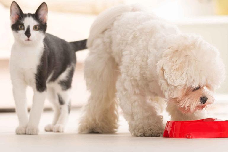 Корм для кошек и собака