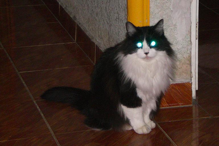 Глаза кошки отражают свет