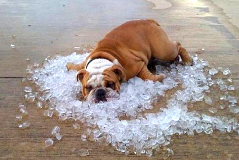 Собака со льдом