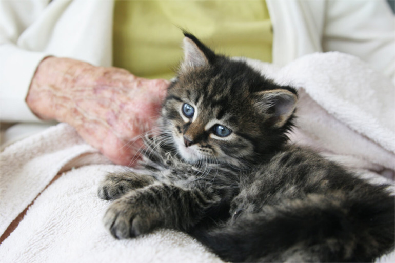 Котёнок рядом