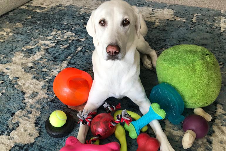 У щенка много игрушек