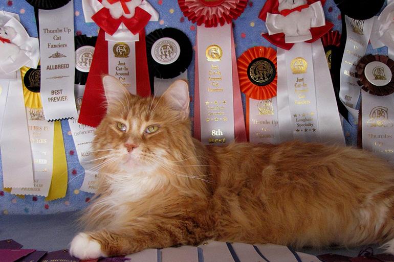 Награды кота
