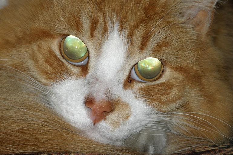 Кошачьи глаза светятся