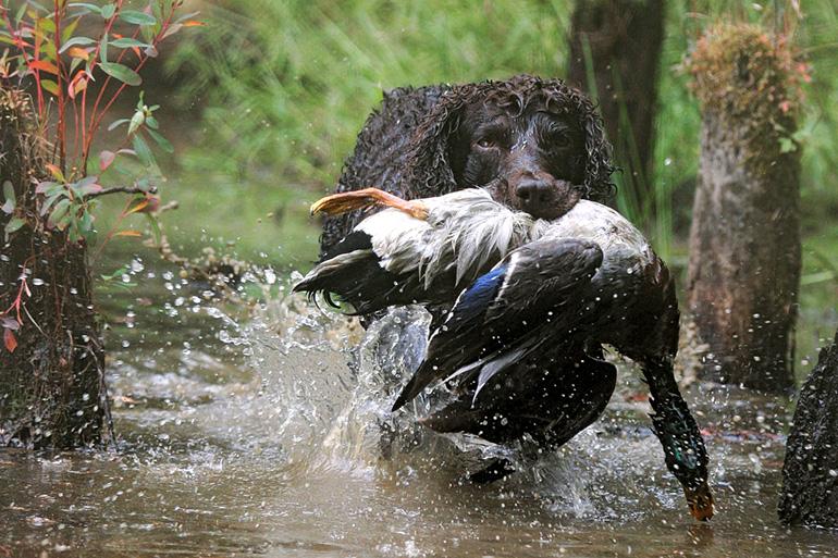 Собака с добычей