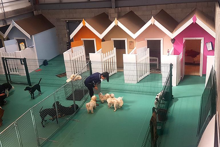 Гостиница для собак