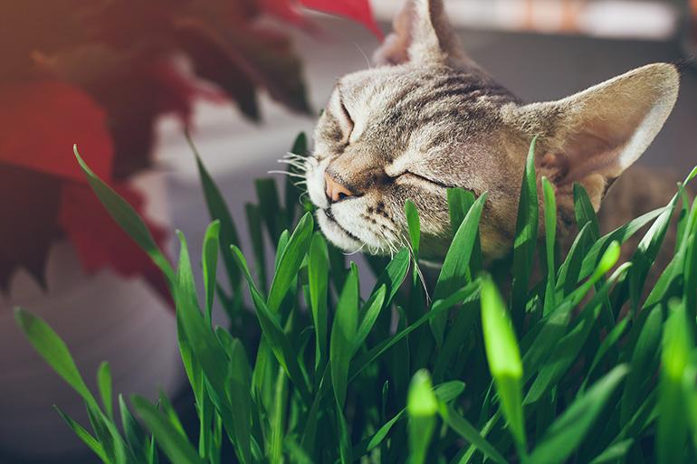 Кошка и трава