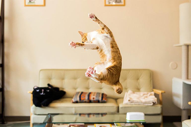 Кошка балуется