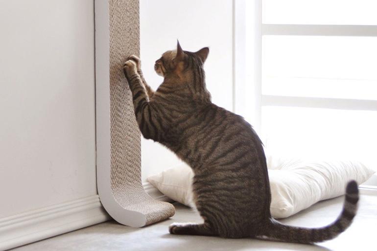 Кот точит когти
