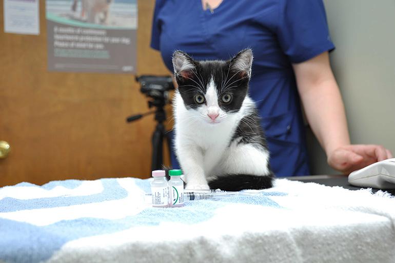 Прививка кота