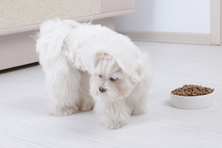 Привередливый щенок