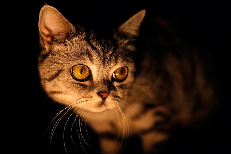 Кошка в ночи
