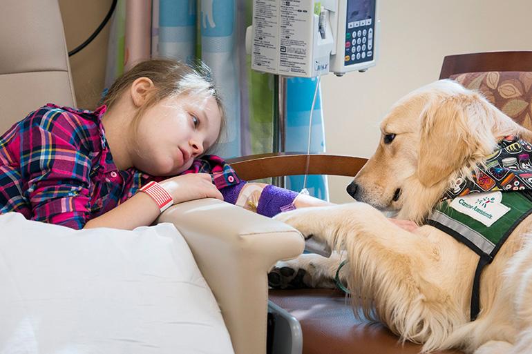 Собака помогает выздоравливать
