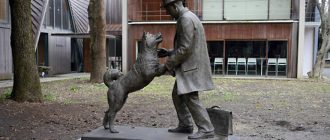 Памятник собаке Хатико