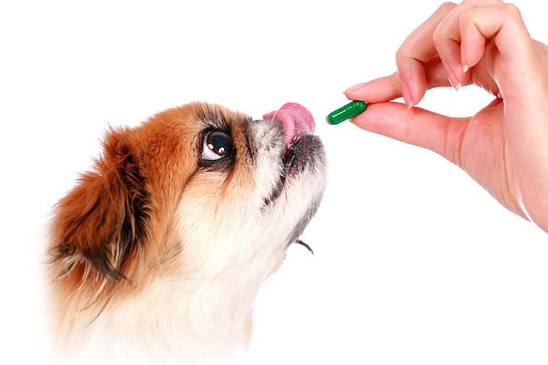 Таблетка собаке