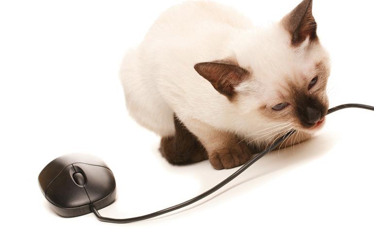 Кот грызёт провод