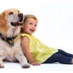 Как устранить агрессию собаки к детям
