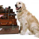Переезд с собакой: как его пережить и как помочь адаптироваться