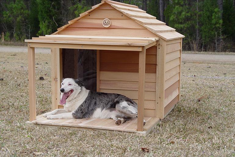 Будка - дом для собаки