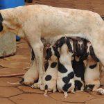 Как выкормить новорождённого щенка