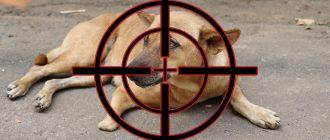 Бездомный пёс под прицелом