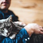 Вы взяли бездомную кошку, что делать дальше?