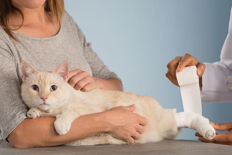 Кошка на перевязке
