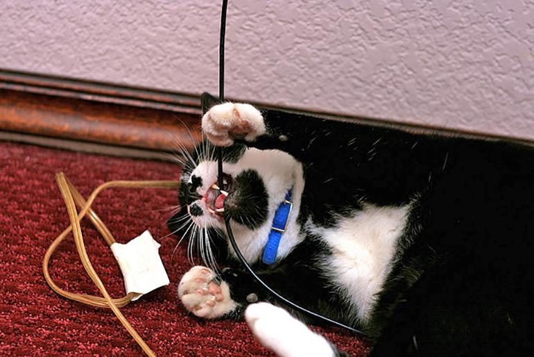 Кот играет с проводами