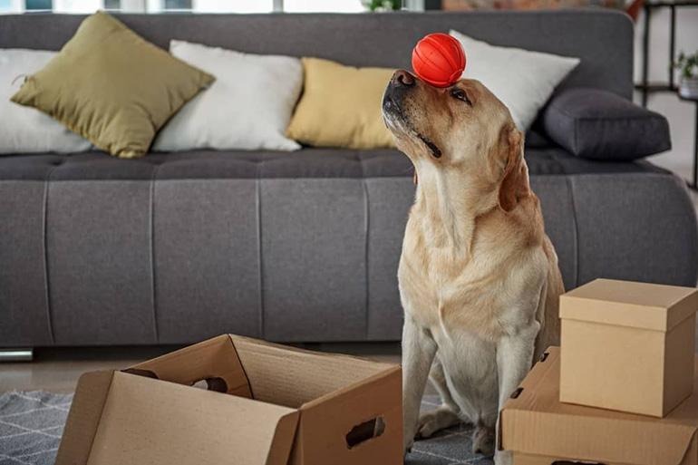 Коробка собаки