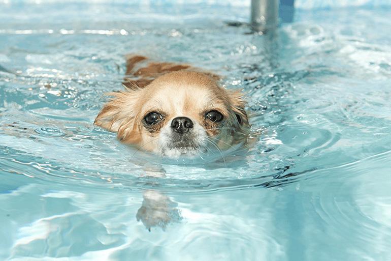 Собака плывёт