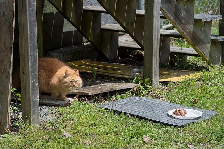 Прикармливание кота