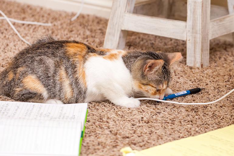 Кошка балуется с проводами