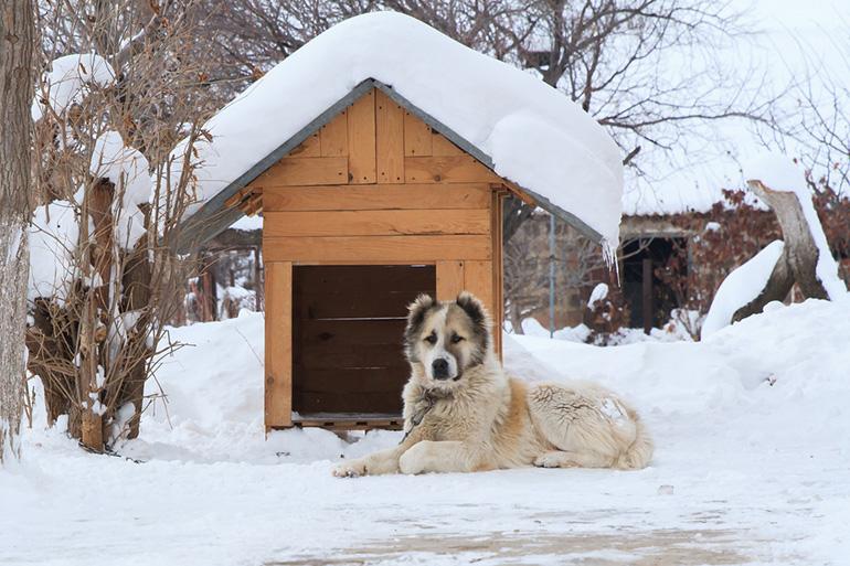 Собачья будка под снегом