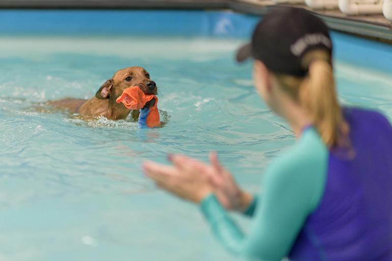 Учим собаку на воде