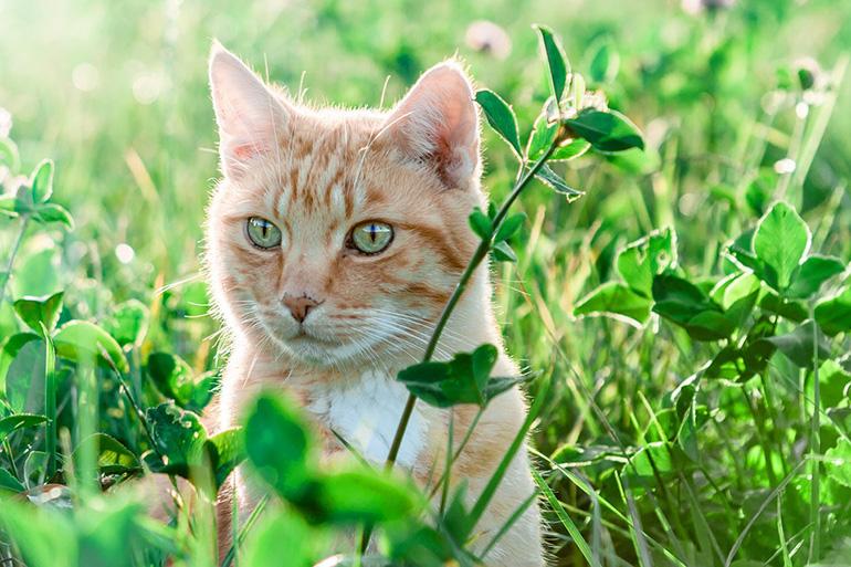 Кот на полянке