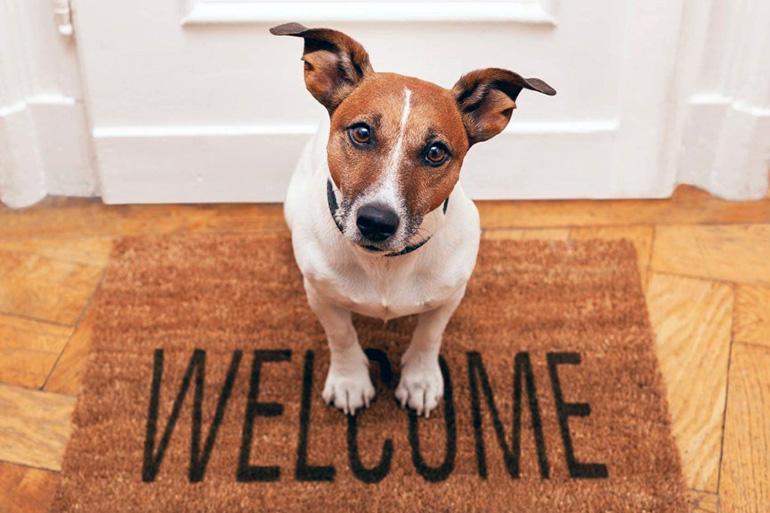 Новый дом собаки