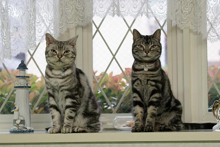 Коты сидят рядом