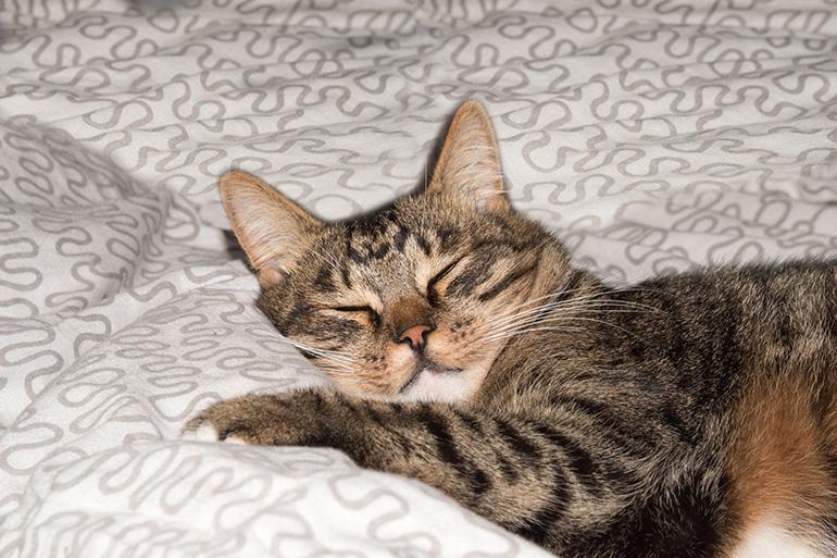 Кот расположился на кровати