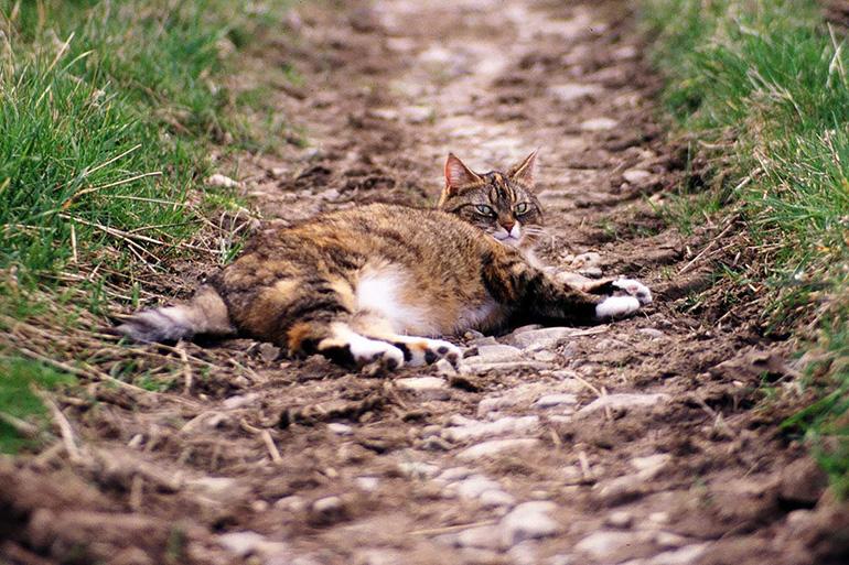Кот за городом