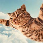 7 мифов о кошках