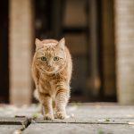 Как правильно искать пропавшую кошку