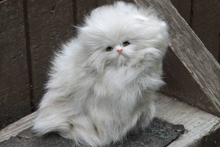 Длинношёрстная кошка
