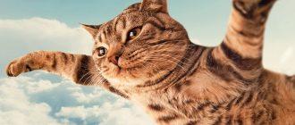 Кошка летит